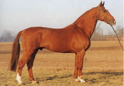Great Grand Sire